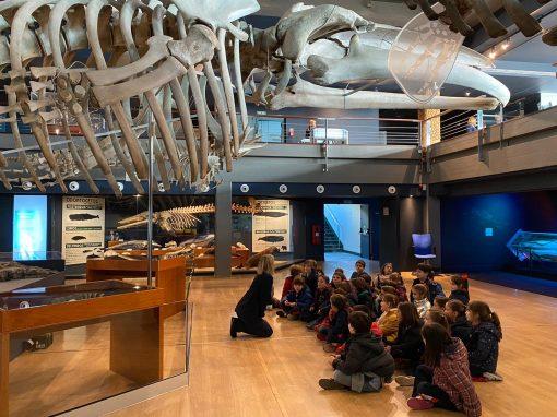 Protegido: Museo Marítimo 1º de Primaria